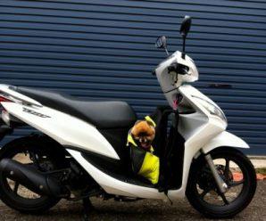 Новая модель Honda Dio 110 прибавила в силе и сбросила вес